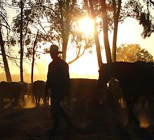 """Days End ....mustering cattle at """"Maloneys"""" Moura. by Lisa Devlin"""