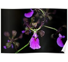 Angels Dressed as Orchids Poster