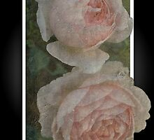 The Pink Rose Card by julie anne  grattan
