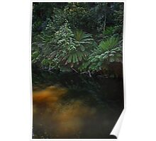 Fernglade reflections Poster