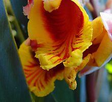 Shell Ginger flower by Joni  Rae