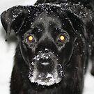 It's Snowvember! by skreklow