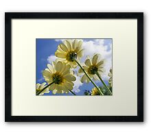 Daisy from a Worms Eye View Framed Print