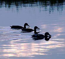 Mallard Ducks at Dusk by Rod Johnson