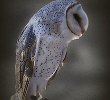 Ivy - The Barn Owl #2 by Elaine Teague