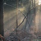 The light in the forest by Katarina Kuhar