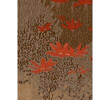 Wild Meadow in Brown Photographic Print