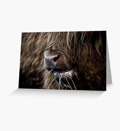 Hamish, Highland Cow, Kilmahog Greeting Card