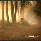 Misty morning by Janone