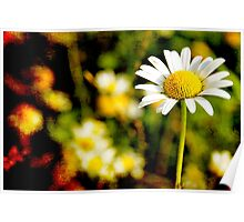 Textured Daisy field Poster