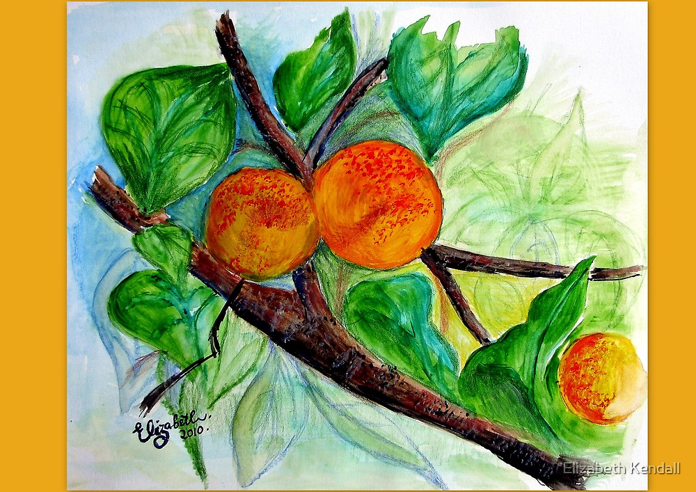 Apricots are nice by Elizabeth Kendall