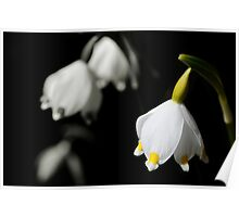 Snowdrops or bells flower Poster
