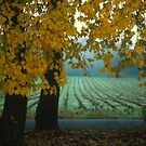 Foggy Fall Morning Thru My Window by madman4
