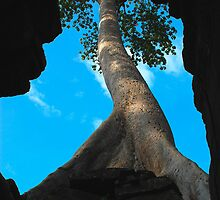 The Way Up - Angkor Temples, Cambodia by Barb Mayer