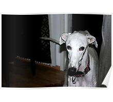 Meet Galgo Ron Poster