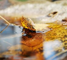 emerge/submerge  by Jeff Stroud