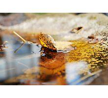emerge/submerge  Photographic Print