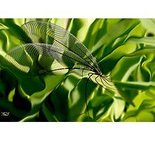 New Species. Photographic Print