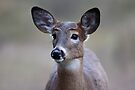 Deer girl...so forlorn - White-tailed Deer by Jim Cumming