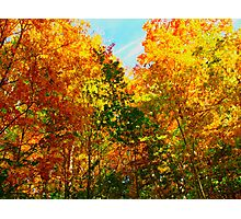 Energetic Leaves Photographic Print