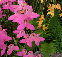 Mixed Glasgow Orchids by Circe Lucas