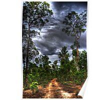 Jarrahwood forest track Poster
