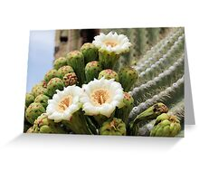 Three Open Saguaro Blooms Greeting Card
