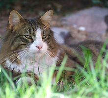 Cat in garden by Ben Jones