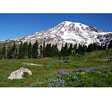 Summer flowers - Mt. Rainier, Washington Photographic Print