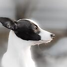 Profile of Tessa by eegibson