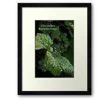 European Grape Framed Print