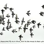 Flying like doves  to their windows... by relicards