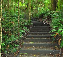 Nature's walk - step by step by imaginethis