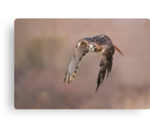 Red-tailed Hawk - Ontario, Canada  Canvas Print