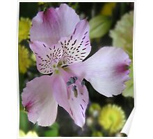 Lily in Vase Poster