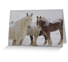 What Snow? Greeting Card