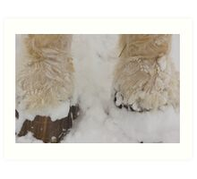 Feathers in the Snow Art Print