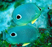 Four Eyed Butterfly Fish by Christopher Smart