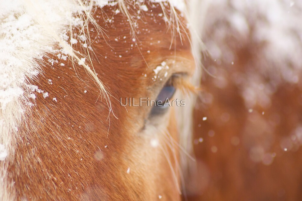 Snow Flakes on Pumpkin by UILFineArts