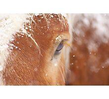Snow Flakes on Pumpkin Photographic Print