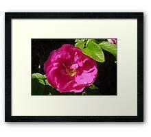 Rosehip Flower Framed Print
