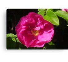 Rosehip Flower Canvas Print