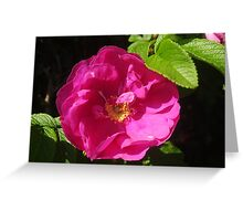 Rosehip Flower Greeting Card