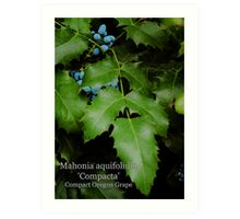 Compact Oregon Grape Art Print