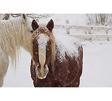 Snow Flakes on my back Photographic Print