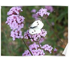Pink floral...white butterfly Poster