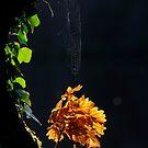 Autumn Web by Derek McMorrine