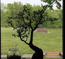 Bonsai Silhouette by Judi FitzPatrick