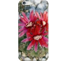 Red Cactus Flowers iPhone Case/Skin