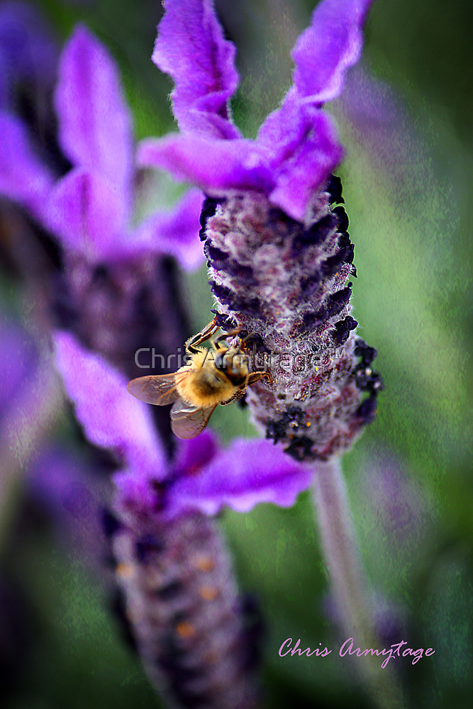 Honey so sweet by Chris Armytage™